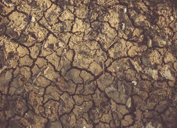 Il seme e il terreno